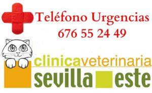 urgencias cv